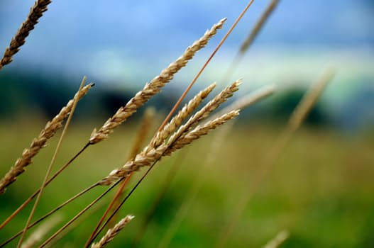 Should you eat wheat? Probably. Find other surprising advice from a registered dietitian here: bit.ly/2mgF0F2