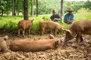Pigs from Grass Roots get to relax in the mud in the forest!